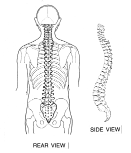 Backbone_(PSF)